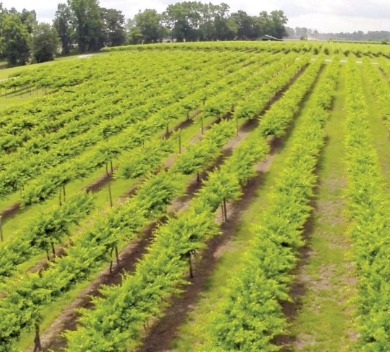 duplin winery | Island Real Estate