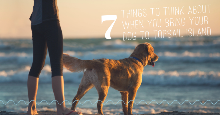 7 Things to Think About When You Bring Your Dog to Topsail Island  | Island Real Estate